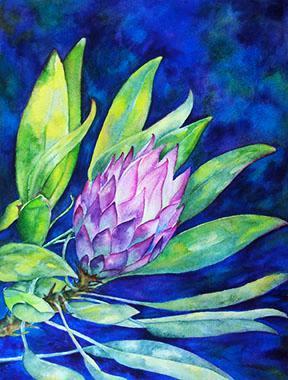 Protea in Color
