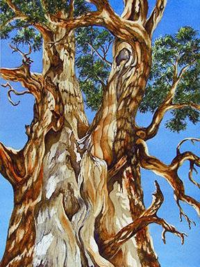 Gnarly Cedar