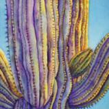 Sunny Saguaro