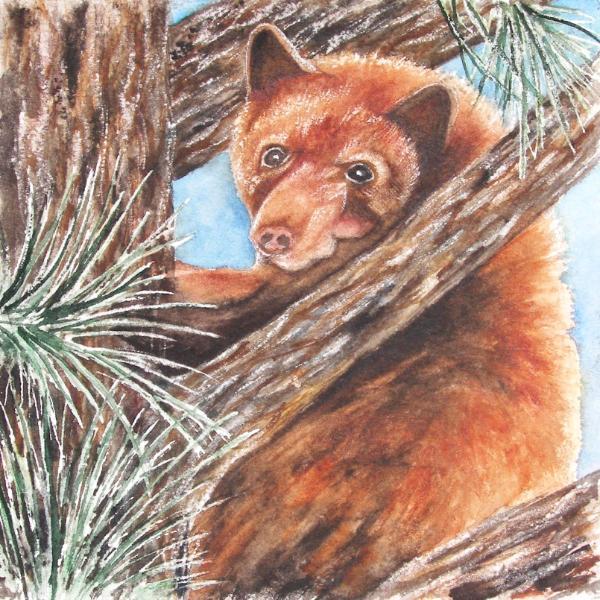 """Cinnamon"" Black Bear"