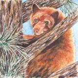 """Cinnamon"" Black Bear"
