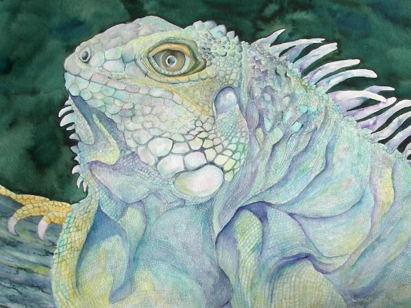 Colors of the Iguana