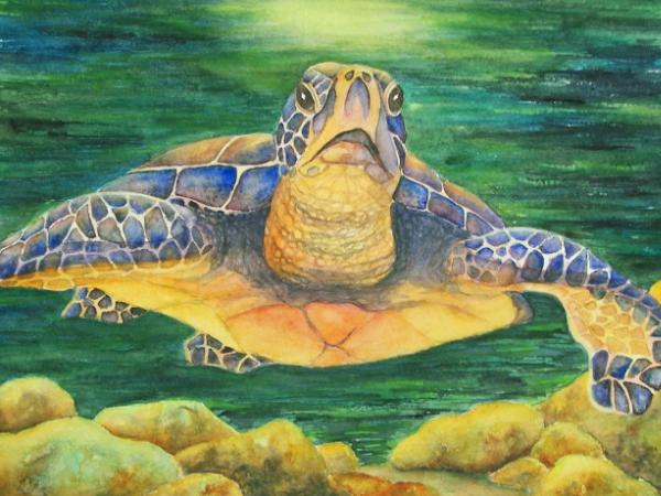 Cruisin' Turtle