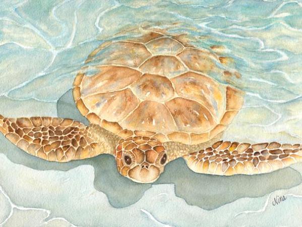 Bora Bora Sea Turtle